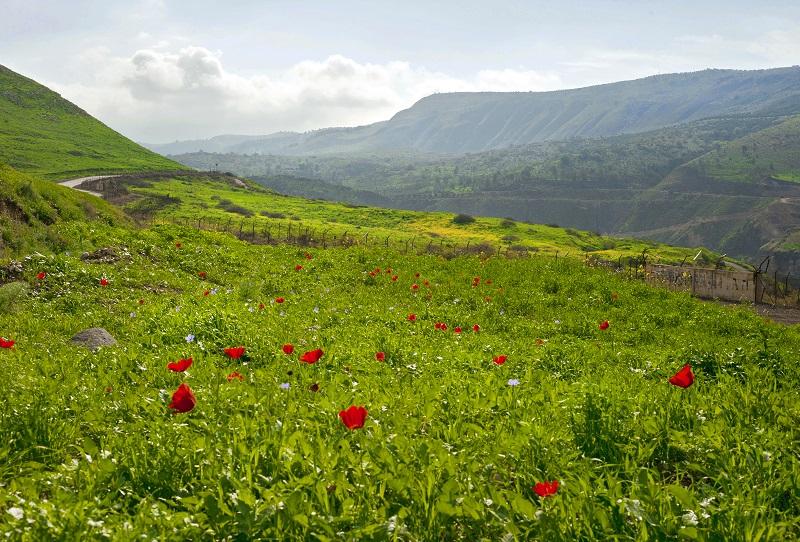 טיולי פריחה בישראל