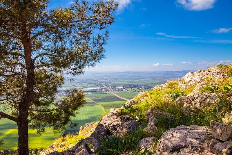 היערות היפים בישראל